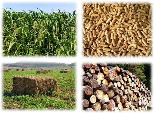 La española Abengoa desarrollará en Bélgica la mayor planta de biomasa del mundo